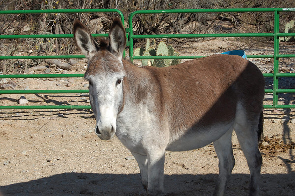 Journal Site 112:  Forever Home Donkey Rescue, Cascabel, AZ - December 6, 2008