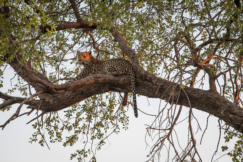Botswana_June_2017 (3743 of 6179).jpg