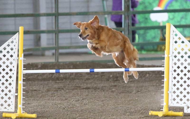 3-10-2019 Bloodhound-0975.jpg