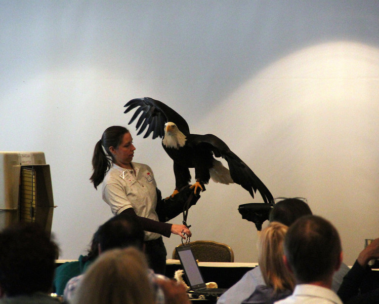 Heather presents Hal the bald eagle