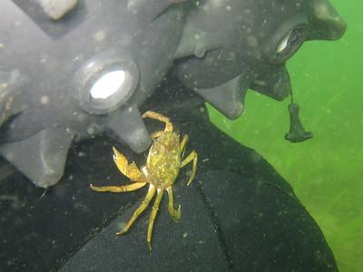 20110901 Dive, Lønsømade