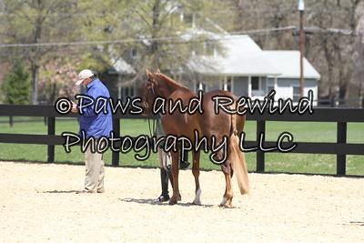 Saturday: Sm, Md, Lg Green Pony Hunter