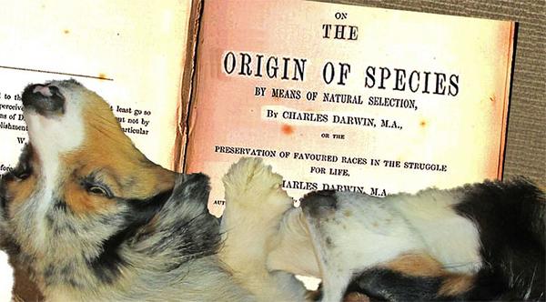 OriginSpecies.GaWy_650x360.jpg