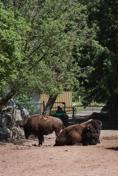 Syracuse Zoo August 2020-23.jpg