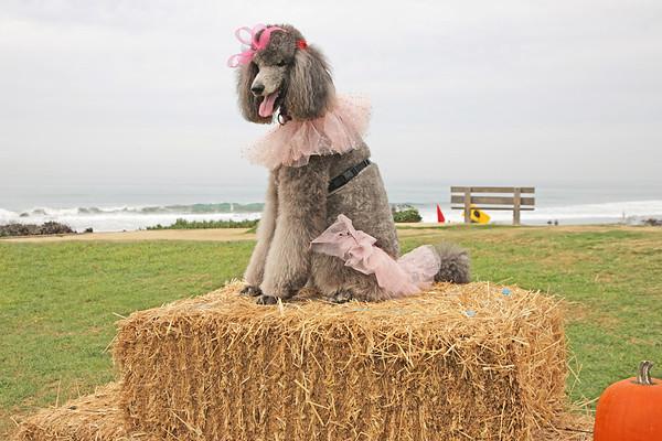 10-25-15: DMF Halloween Dog Parade