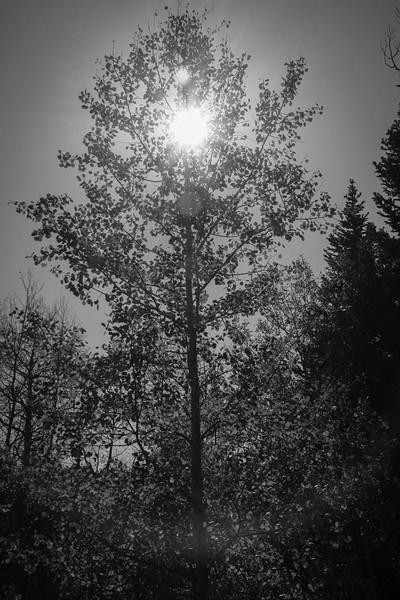 191007 -135417 - DSC08406.jpg