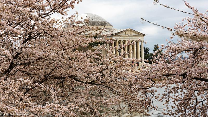 RV Cherry Blossoms 4-2019
