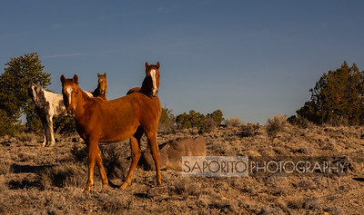 Chaco Canyon New Mexico