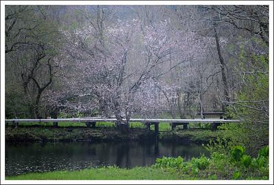 Shiseikaen in April