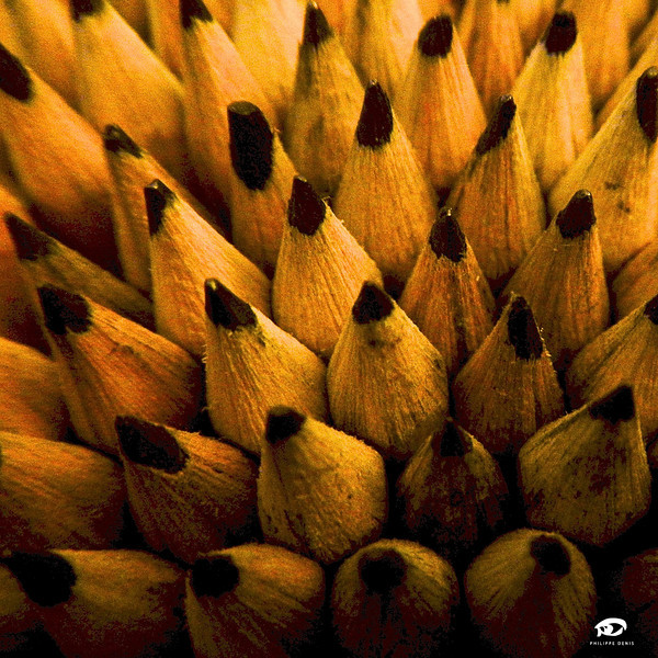 Crayons Wilo-5.jpg