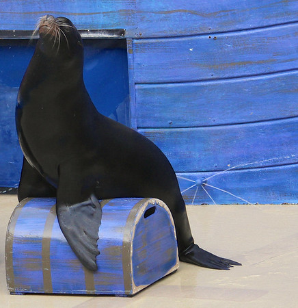Clyde and Seamore the Sea Lions