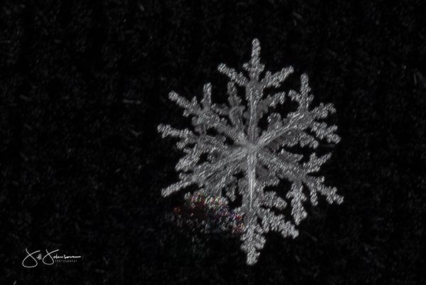 snowflakes-2707.jpg