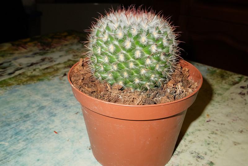 2017-11-01 cactus-001.JPG