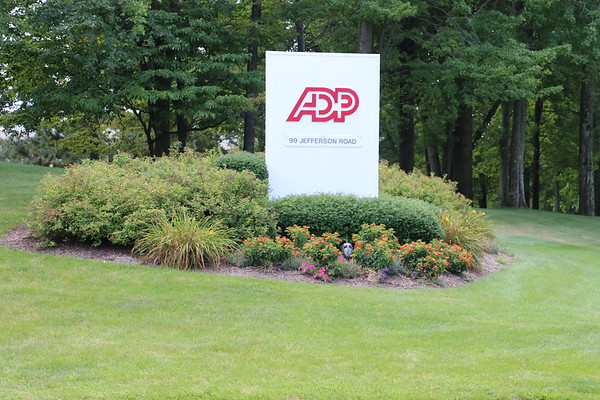 99 Jerrerson Rd, Parsippany, Landscape Design and field inventory Aug. 2017 start.