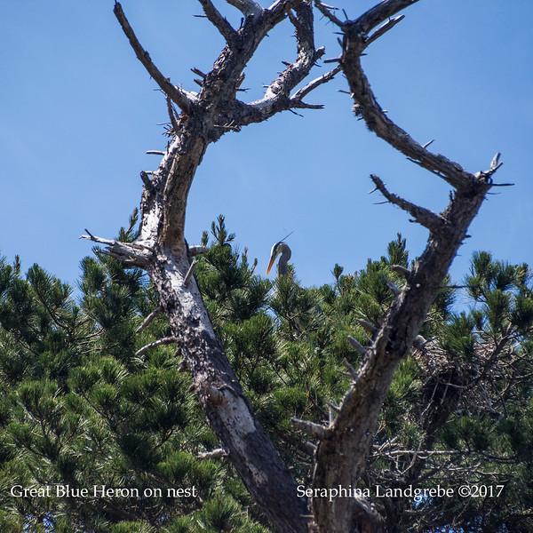 _DSC0405Heart nest Nest.jpg