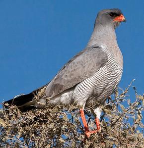 November 2012 (Natural History)