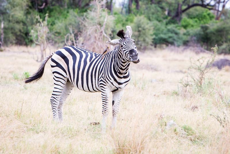 Botswana-20121128-133.jpg