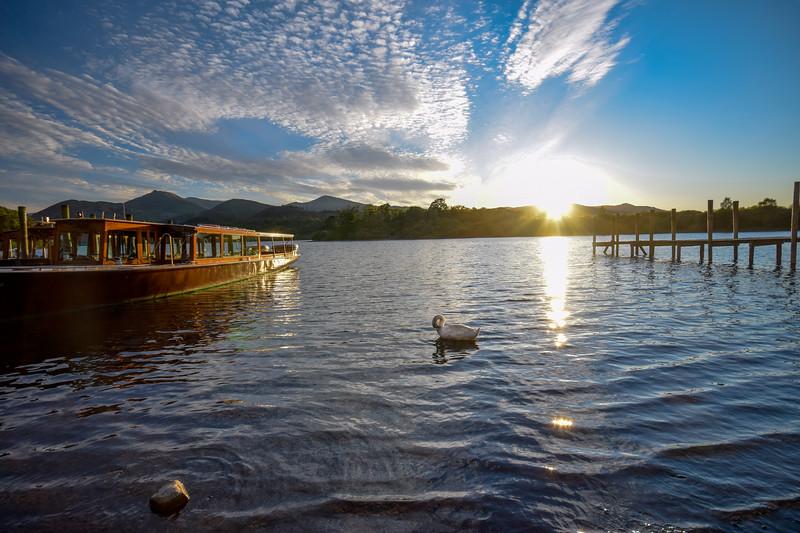 Derwentwater Swan
