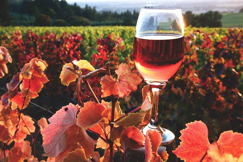 Wine and red vines hrz 830 sf.jpg