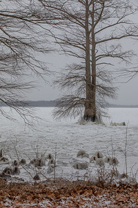 Reelfoot Lake - Ice and Ice Castles - 2-14-21