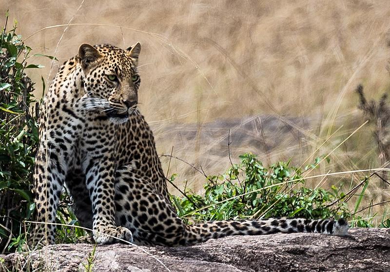 Kenya036.jpg