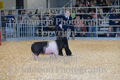 2018 KISD Swine Show Class 2