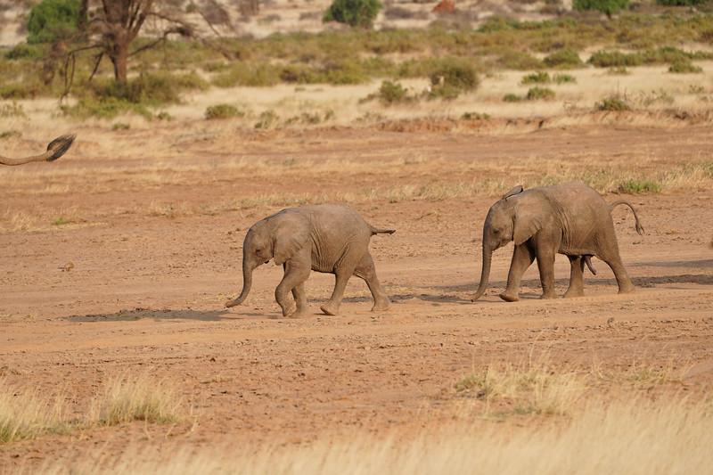 safari-2018-19.jpg