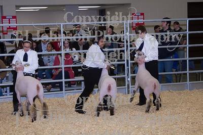 2014 KISD Livestock Show Lamb Class 3