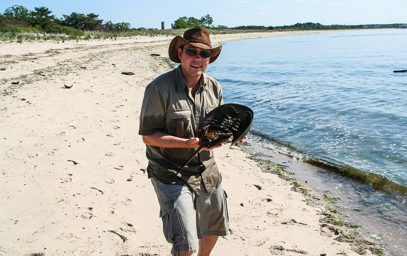 Me with male horseshoe crab