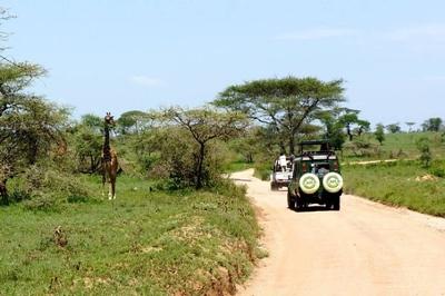1494239970African-Safari-21.jpg