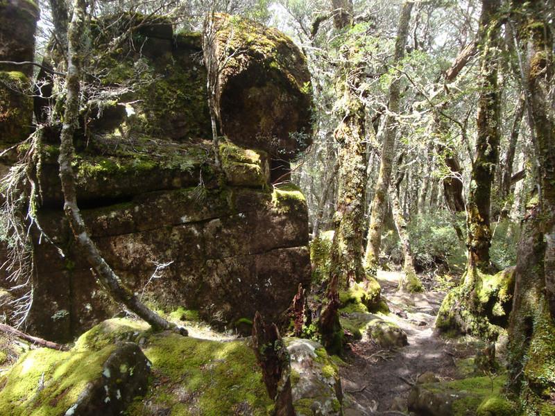 Trail forest 1.JPG