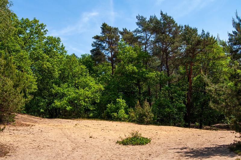 Nationaal Park Hoge Kempen - Duinengordel, omgeving Donderslag 09.jpg
