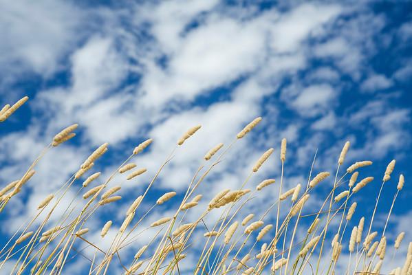 Skies + Vistas