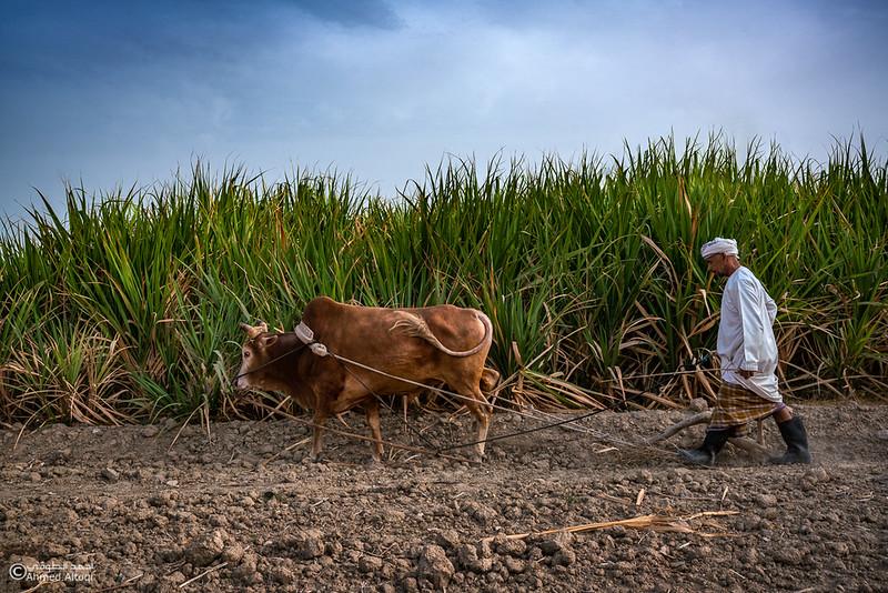 DSC01888-Edit (1)Bahla- Oman.jpg