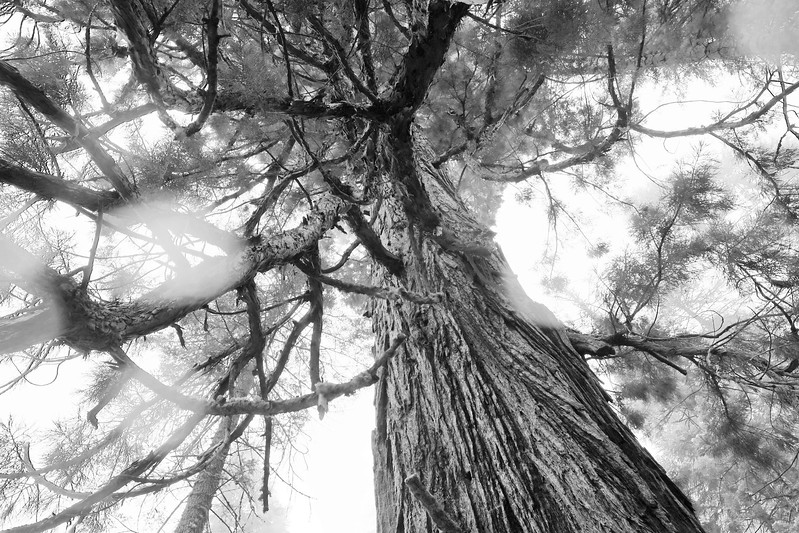 California Day 6 Sequoia 05-30-2017 112.JPG
