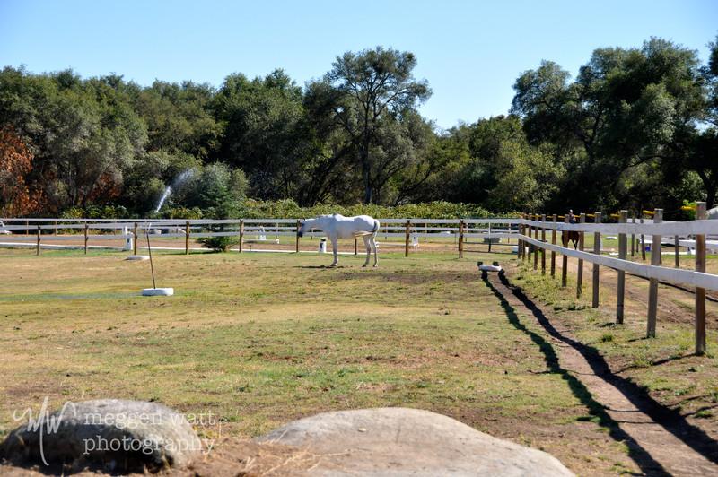 EB&Horses-080.jpg