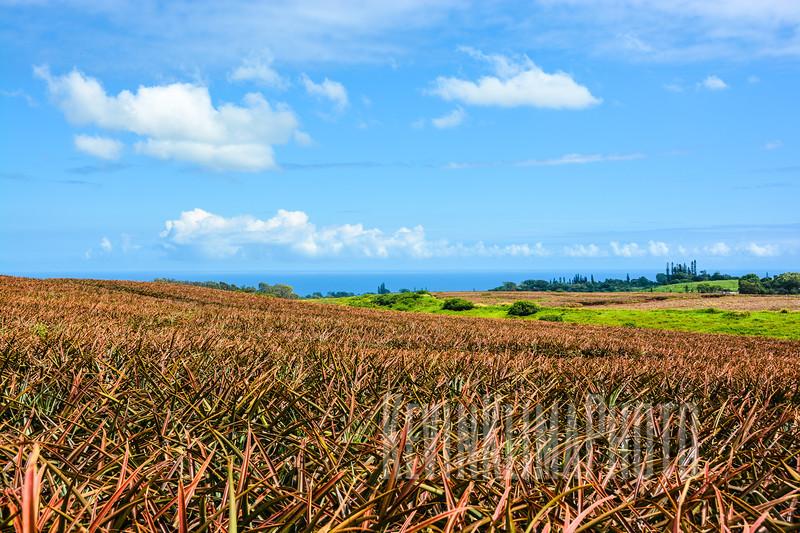 Maui101.jpg
