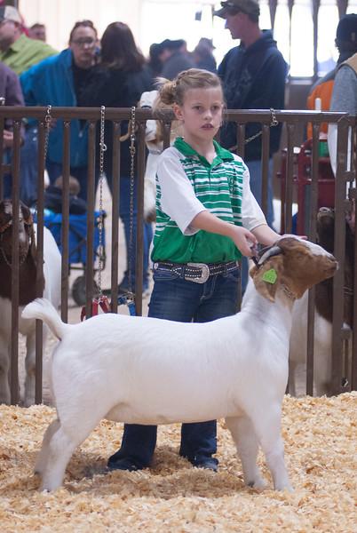 kay_county_showdown_goats_20191207-121.jpg