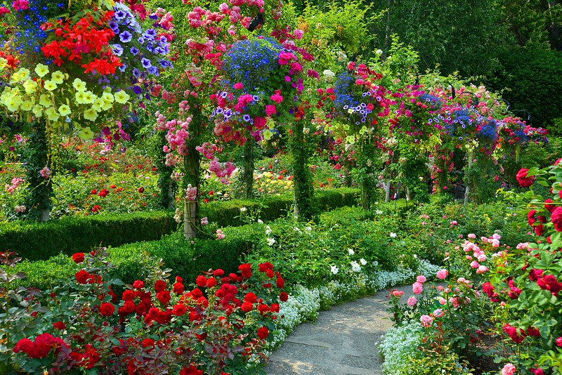 The Butchart Gardens Rose Garden