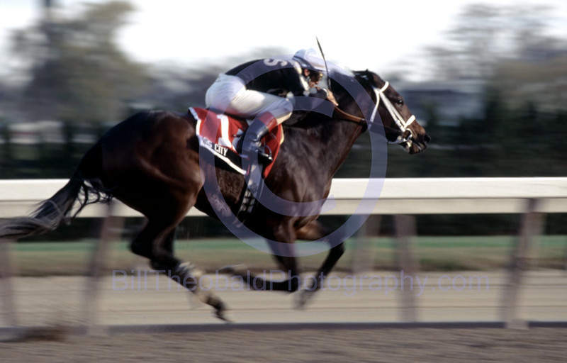 Sis City shown winning the 2004 Demoiselle Stakes at Aqueduct race Track.