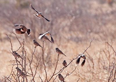 El Paso Audubon trip to Hawk Alley, NE El Paso, 02/22/14