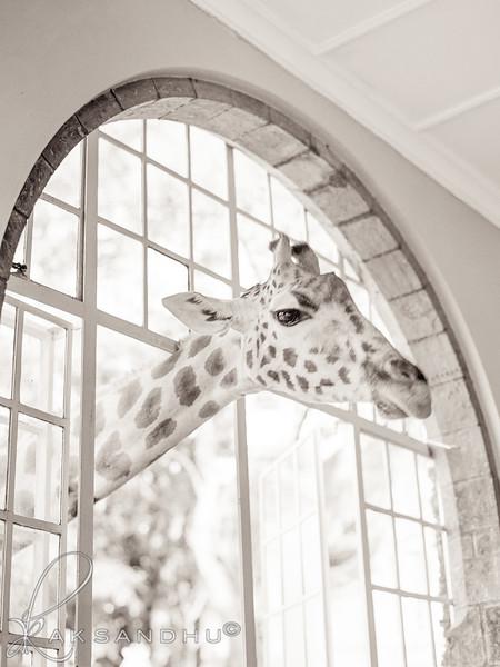 Safari-Africans-097.jpg