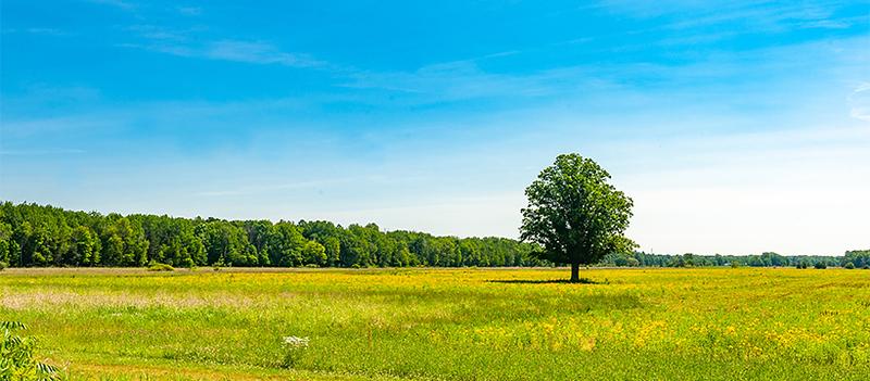 20200622 Swede Road Land-9718 edited 820x360.jpg