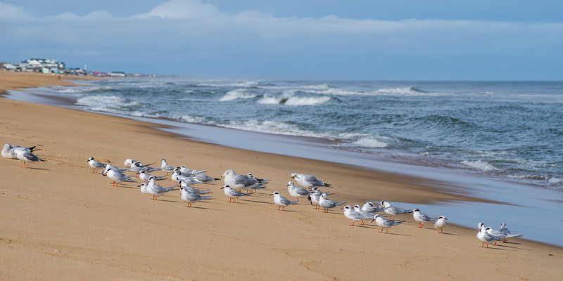 Birds 3282