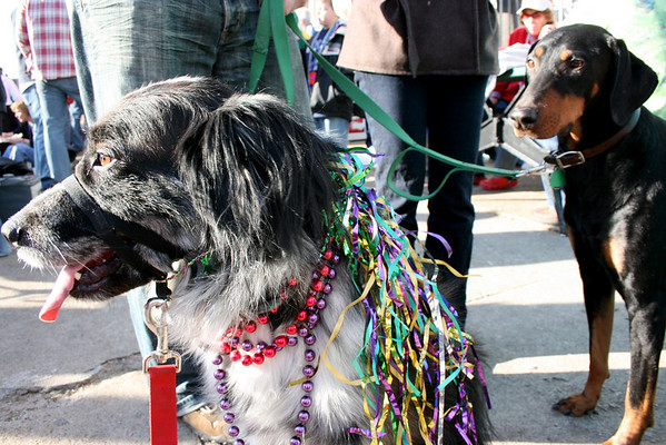 Krewe of Barkus