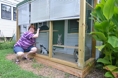 "The ""Catio"" kittens in Athens"