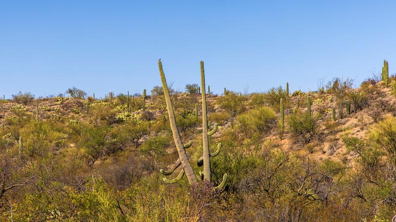 Desert Brawl