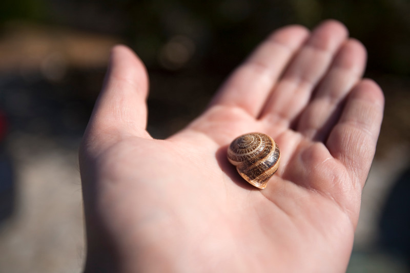 Man's hand holding a snail, Faro, Portugal