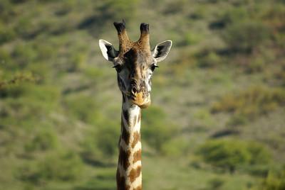 Tanzania wildness
