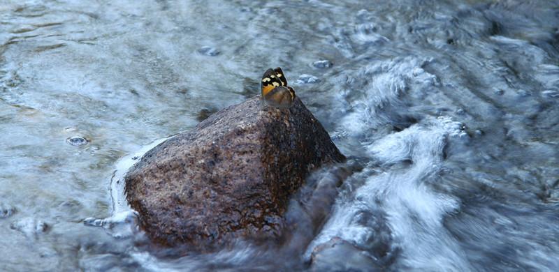 Zumstiens - Butterfly